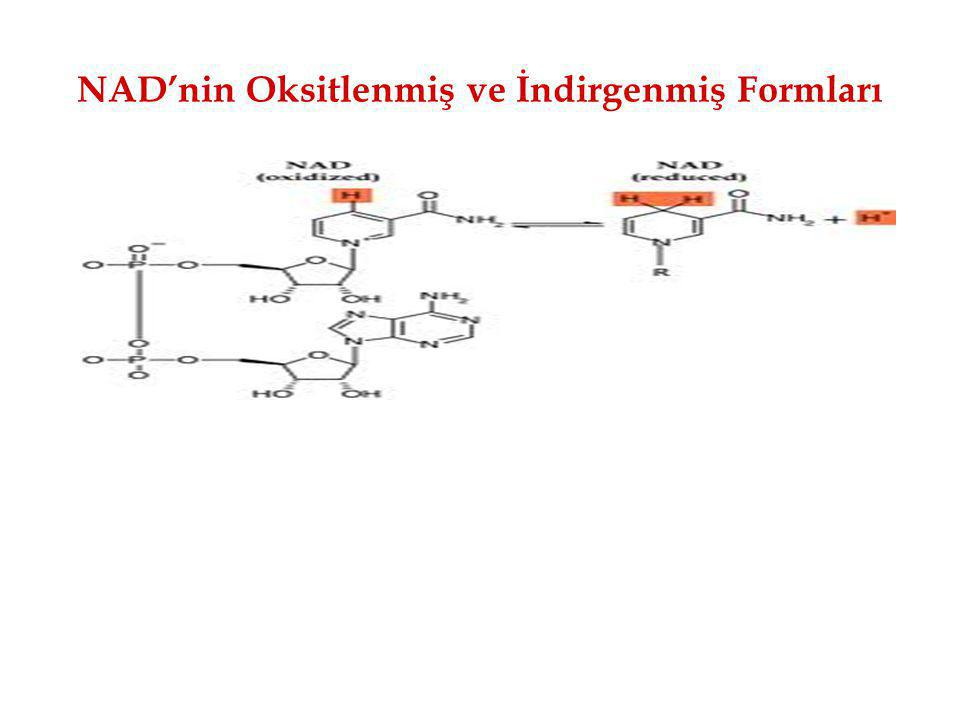NAD'nin Oksitlenmiş ve İndirgenmiş Formları