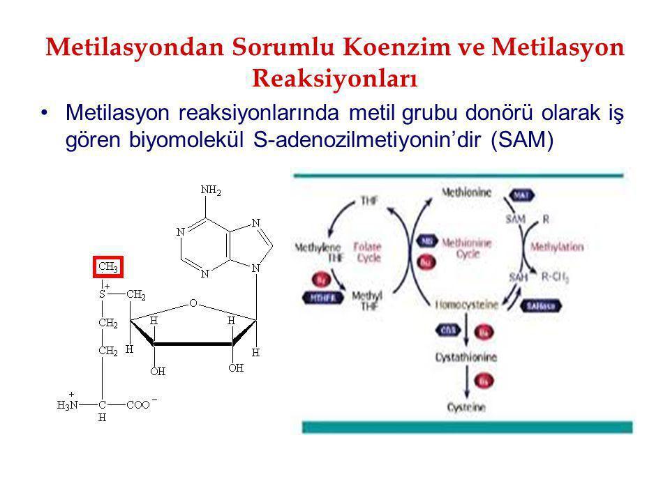 Metilasyondan Sorumlu Koenzim ve Metilasyon Reaksiyonları