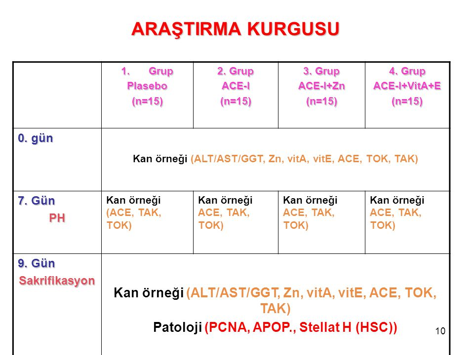 ARAŞTIRMA KURGUSU Patoloji (PCNA, APOP., Stellat H (HSC)) 0. gün