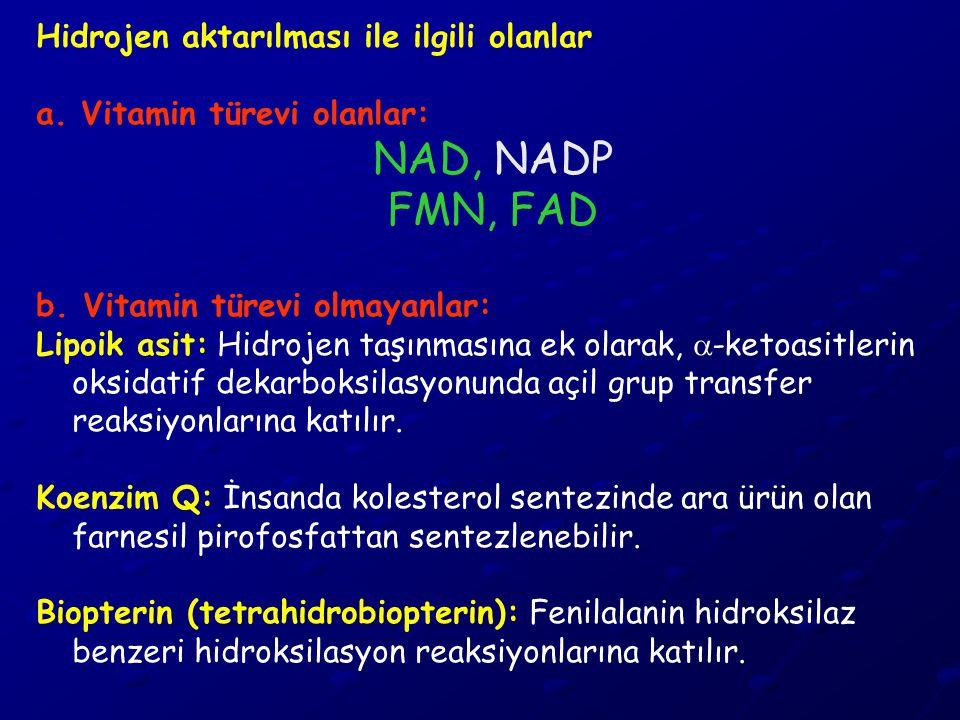 NAD, NADP FMN, FAD Hidrojen aktarılması ile ilgili olanlar