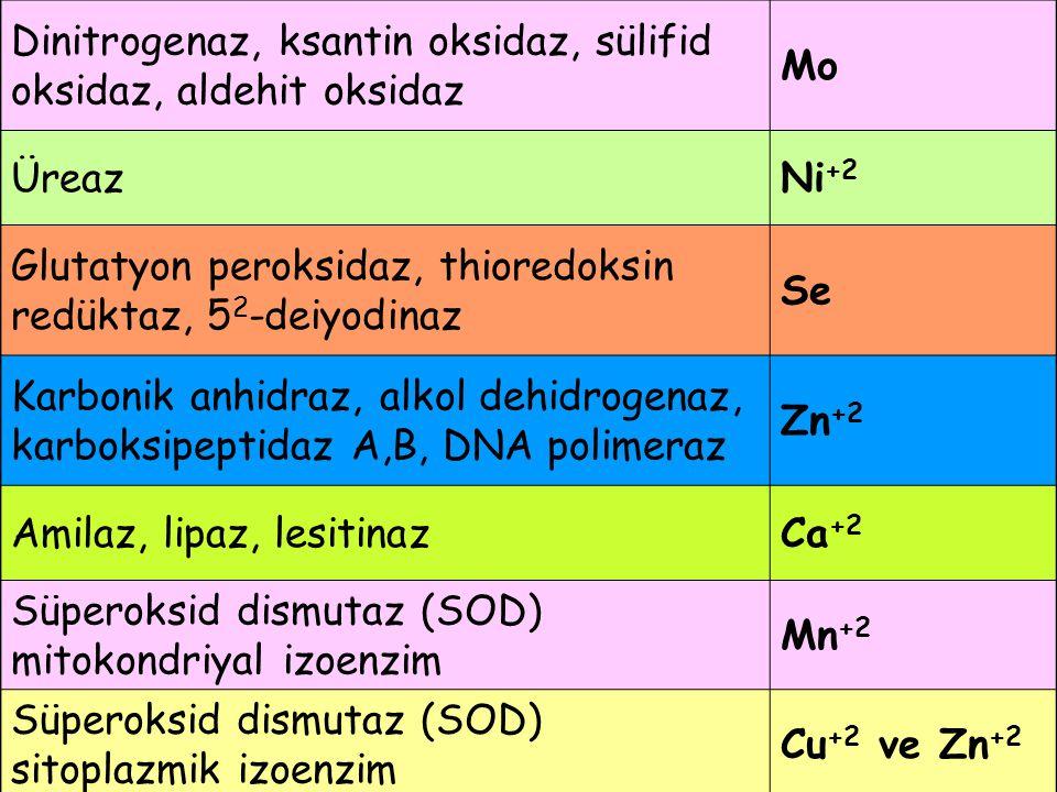 Dinitrogenaz, ksantin oksidaz, sülifid oksidaz, aldehit oksidaz