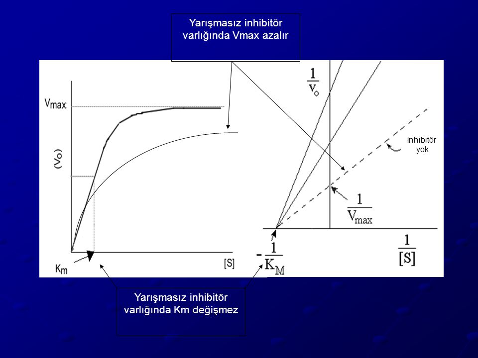 Yarışmasız inhibitör varlığında Km değişmez