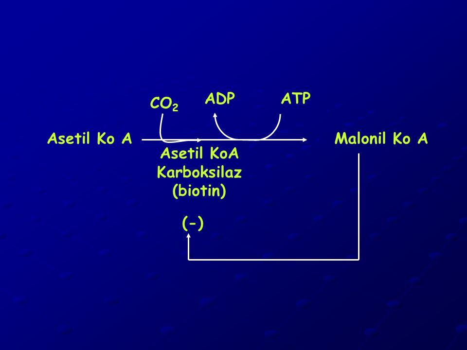 ADP ATP CO2 Asetil Ko A Malonil Ko A Asetil KoA Karboksilaz (biotin) (-)