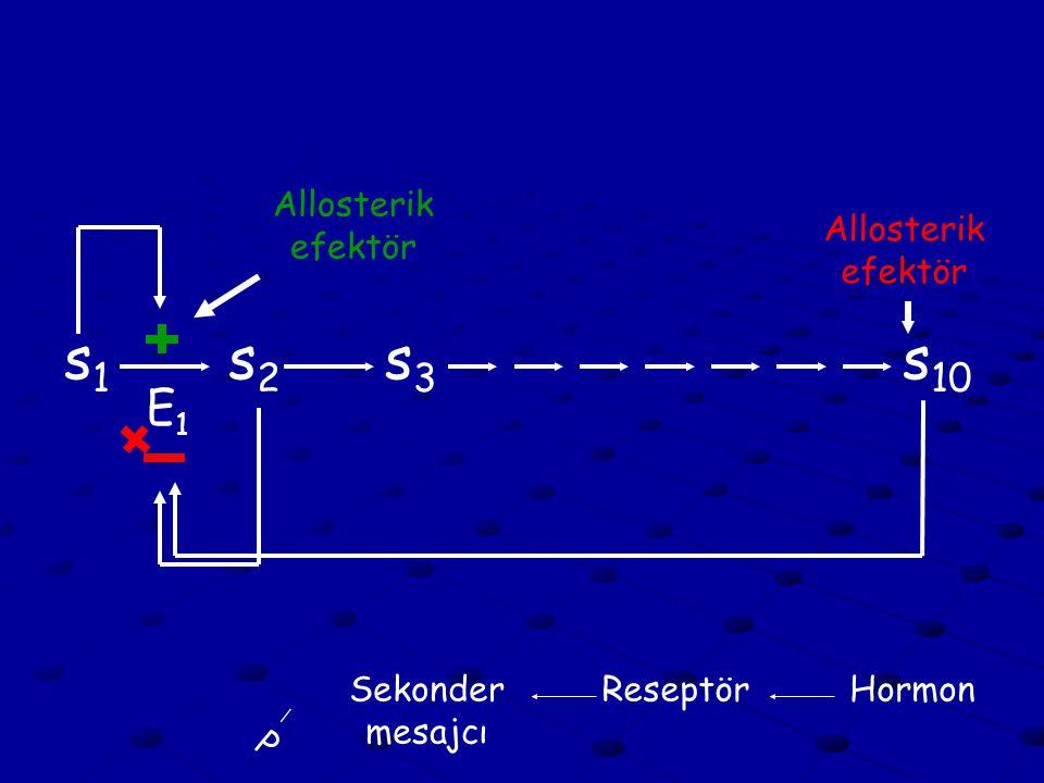 s1 s2 s3 s10 E1 Allosterik efektör Allosterik efektör Sekonder mesajcı