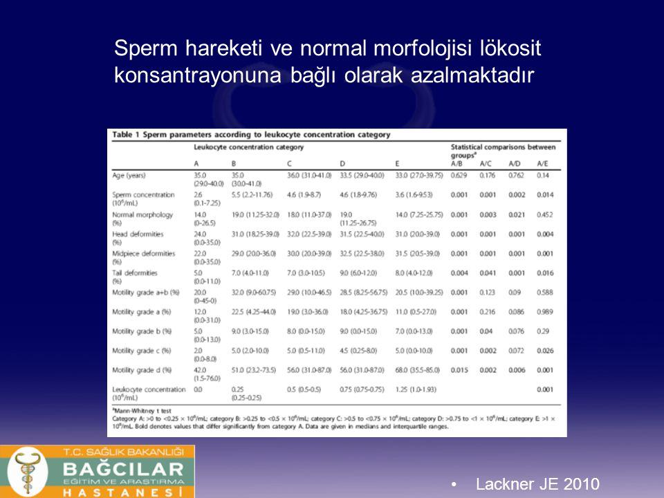 Sperm hareketi ve normal morfolojisi lökosit konsantrayonuna bağlı olarak azalmaktadır