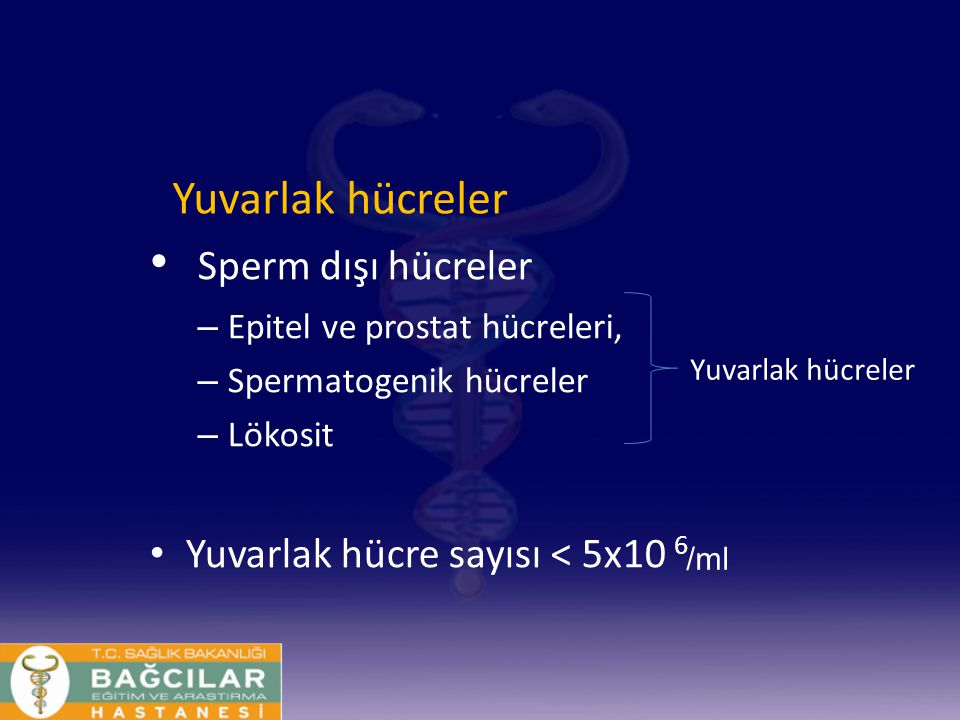 Sperm dışı hücreler Yuvarlak hücreler