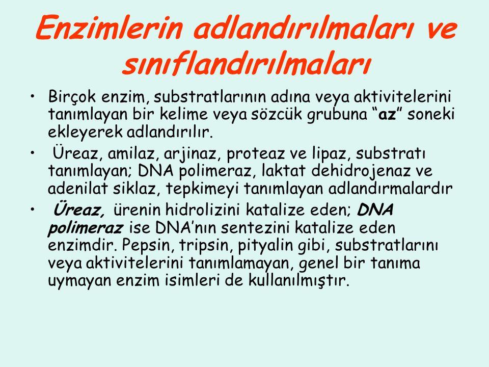 Enzimlerin adlandırılmaları ve sınıflandırılmaları