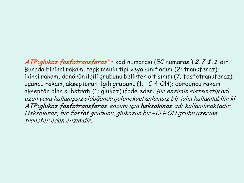 ATP:glukoz fosfotransferaz' n kod numarası (EC numarası) 2.7.1.1 dir.