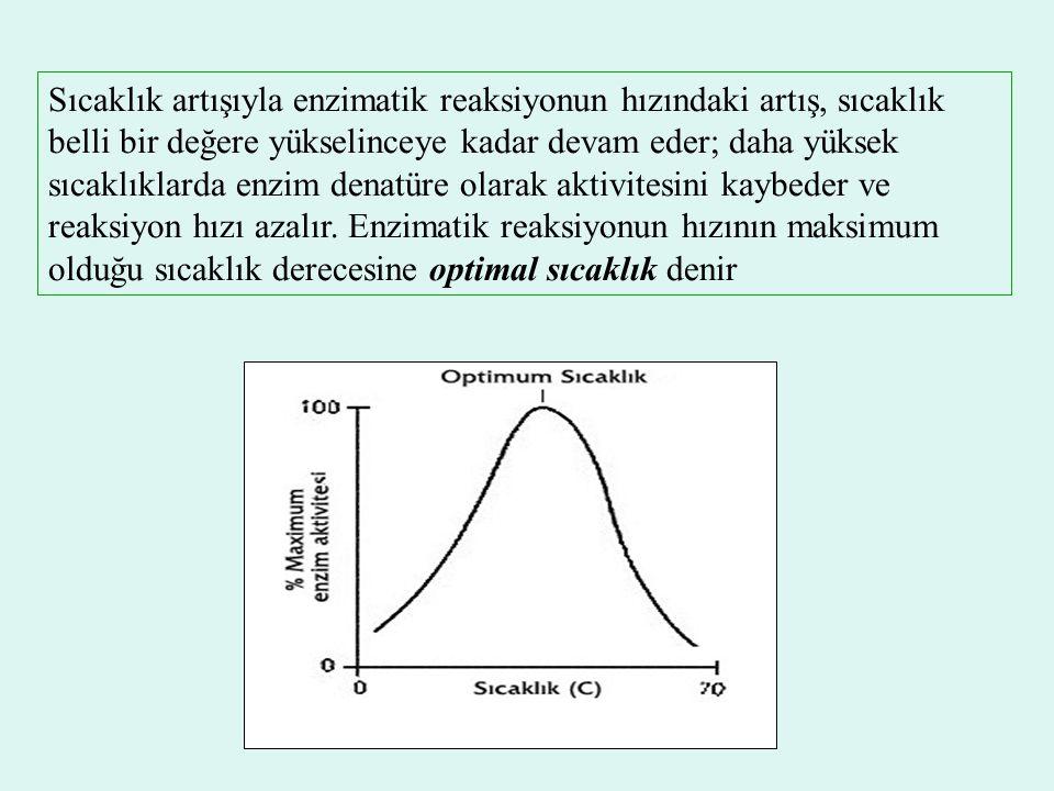 Sıcaklık artışıyla enzimatik reaksiyonun hızındaki artış, sıcaklık belli bir değere yükselinceye kadar devam eder; daha yüksek sıcaklıklarda enzim denatüre olarak aktivitesini kaybeder ve reaksiyon hızı azalır.