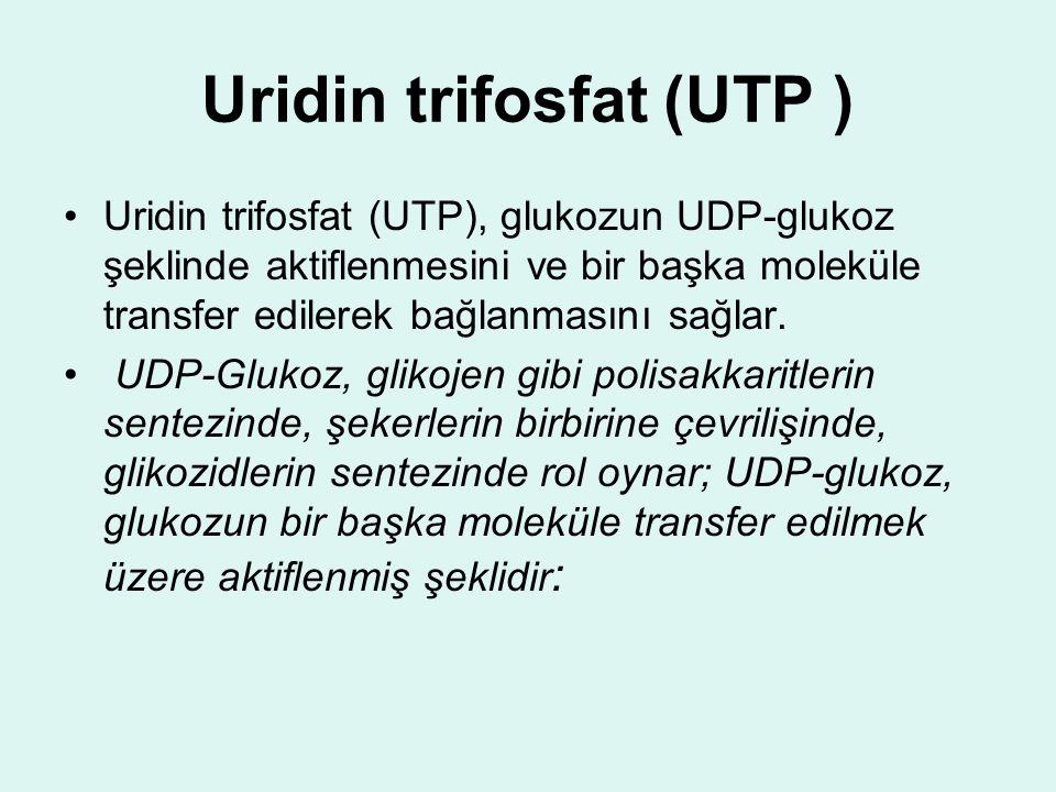 Uridin trifosfat (UTP )