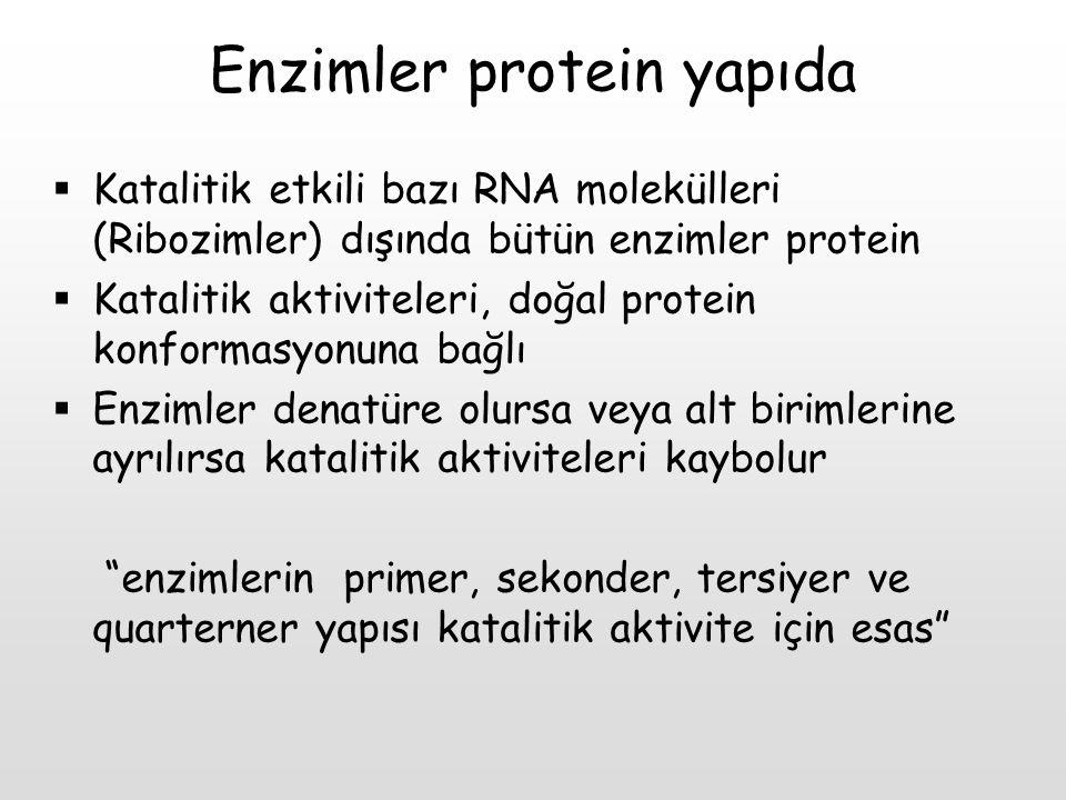 Enzimler protein yapıda