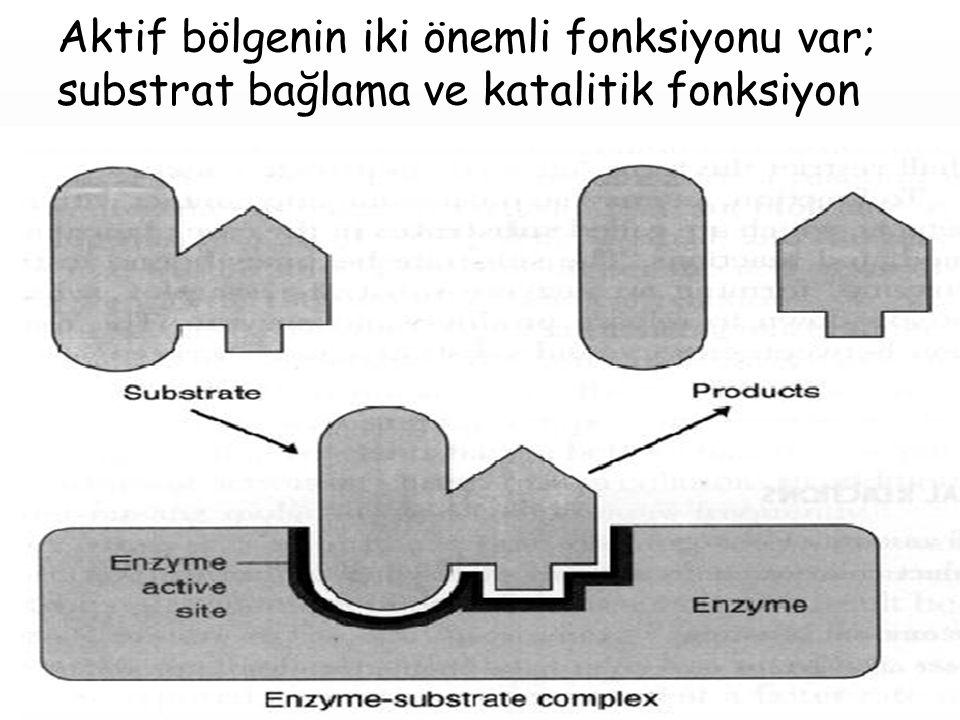 Aktif bölgenin iki önemli fonksiyonu var; substrat bağlama ve katalitik fonksiyon