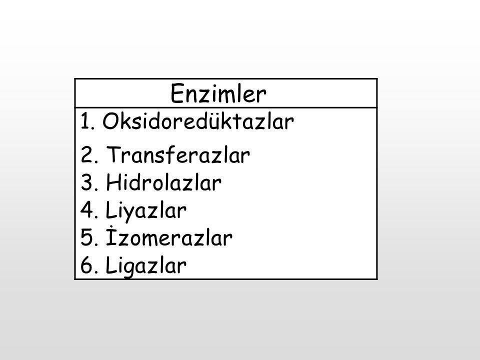 Enzimler 1. Oksidoredüktazlar 2. Transferazlar 3. Hidrolazlar