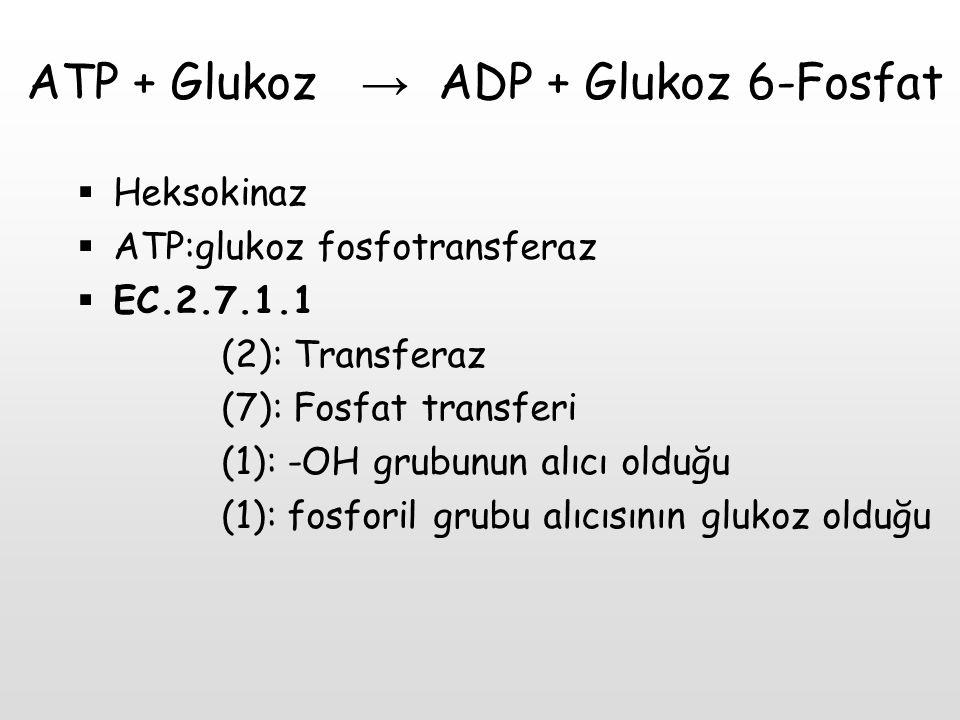 ATP + Glukoz → ADP + Glukoz 6-Fosfat