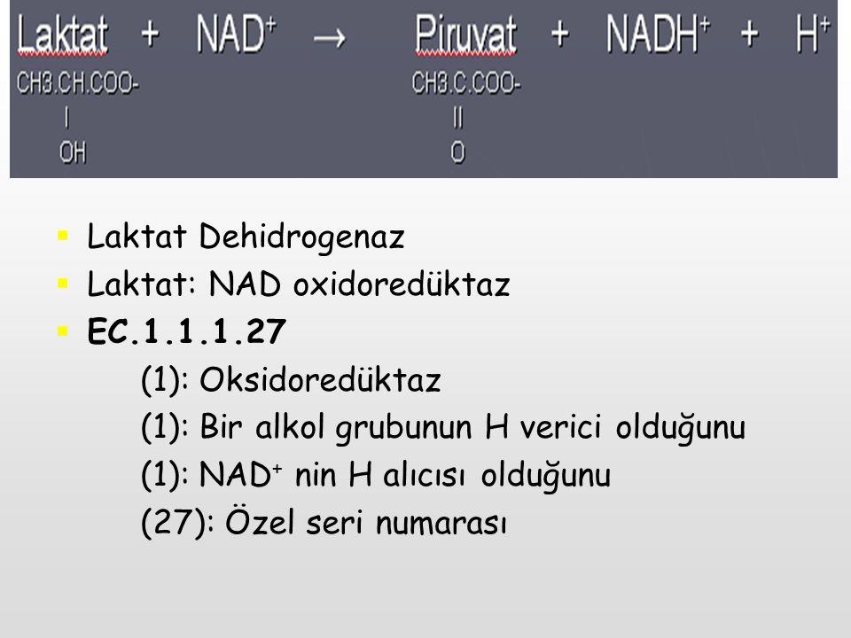 Laktat Dehidrogenaz Laktat: NAD oxidoredüktaz. EC.1.1.1.27. (1): Oksidoredüktaz. (1): Bir alkol grubunun H verici olduğunu.