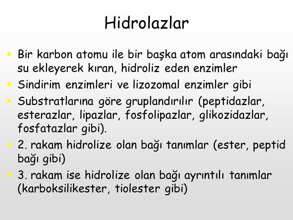 Hidrolazlar Bir karbon atomu ile bir başka atom arasındaki bağı su ekleyerek kıran, hidroliz eden enzimler.