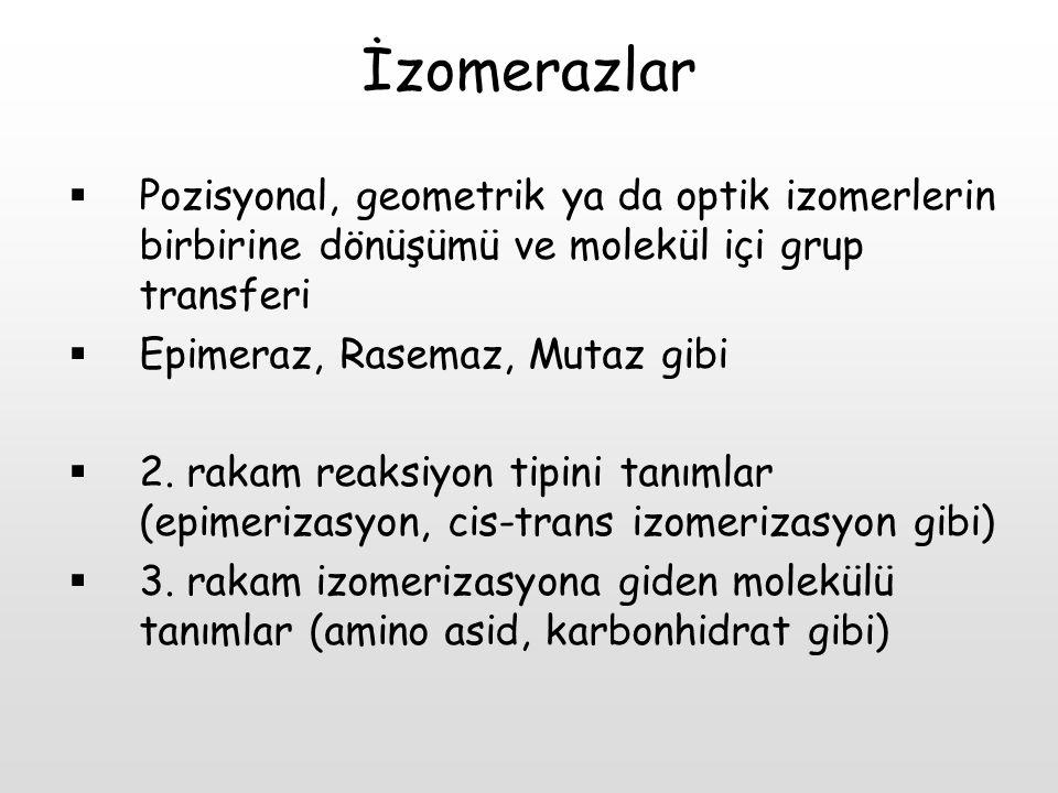 İzomerazlar Pozisyonal, geometrik ya da optik izomerlerin birbirine dönüşümü ve molekül içi grup transferi.