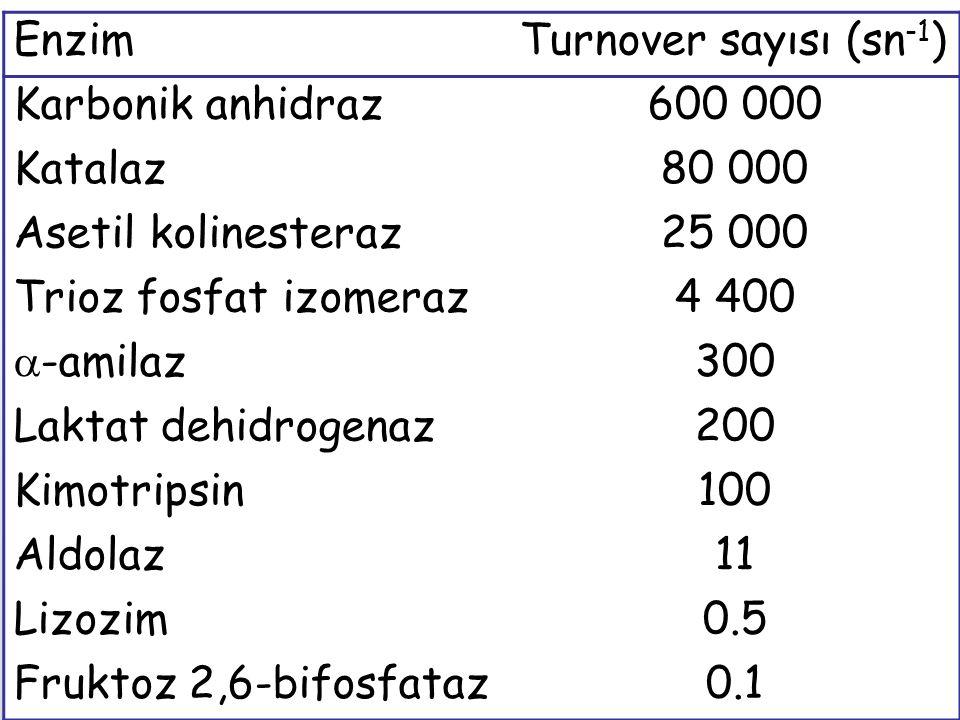 Enzim Turnover sayısı (sn-1) Karbonik anhidraz 600 000 Katalaz 80 000