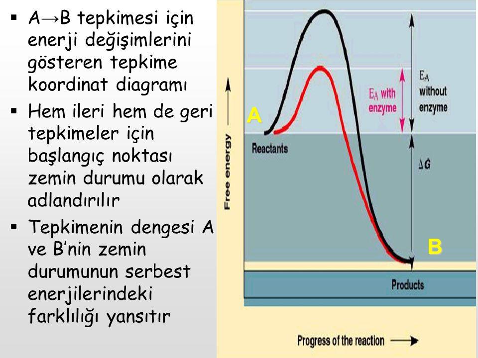 A B. A→B tepkimesi için enerji değişimlerini gösteren tepkime koordinat diagramı.