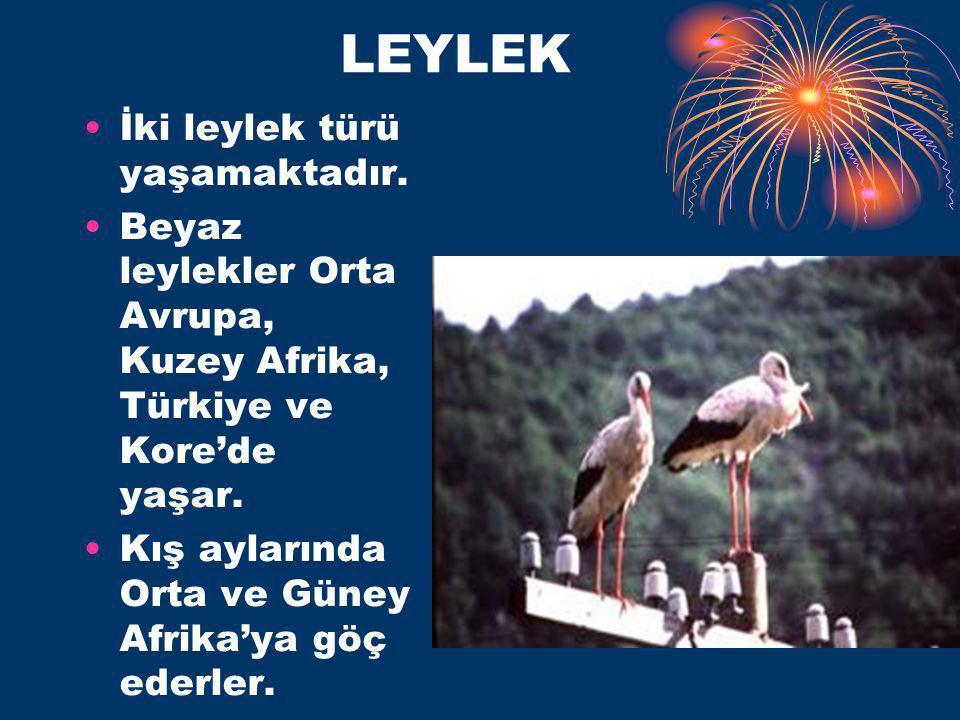 LEYLEK İki leylek türü yaşamaktadır.