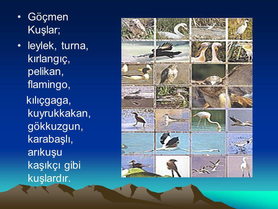 Göçmen Kuşlar; leylek, turna, kırlangıç, pelikan, flamingo, kılıçgaga, kuyrukkakan, gökkuzgun, karabaşlı, arıkuşu kaşıkçı gibi kuşlardır.
