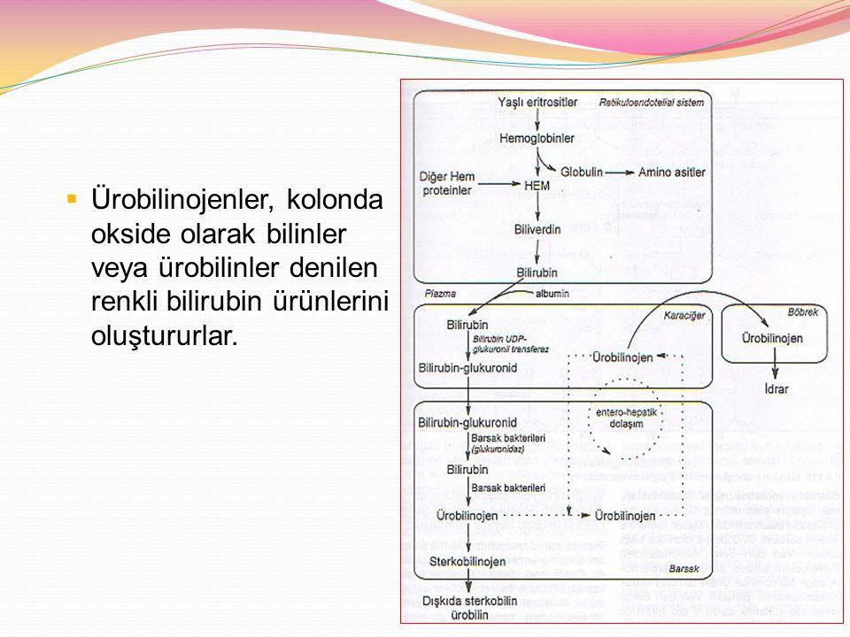 Ürobilinojenler, kolonda okside olarak bilinler veya ürobilinler denilen renkli bilirubin ürünlerini oluştururlar.