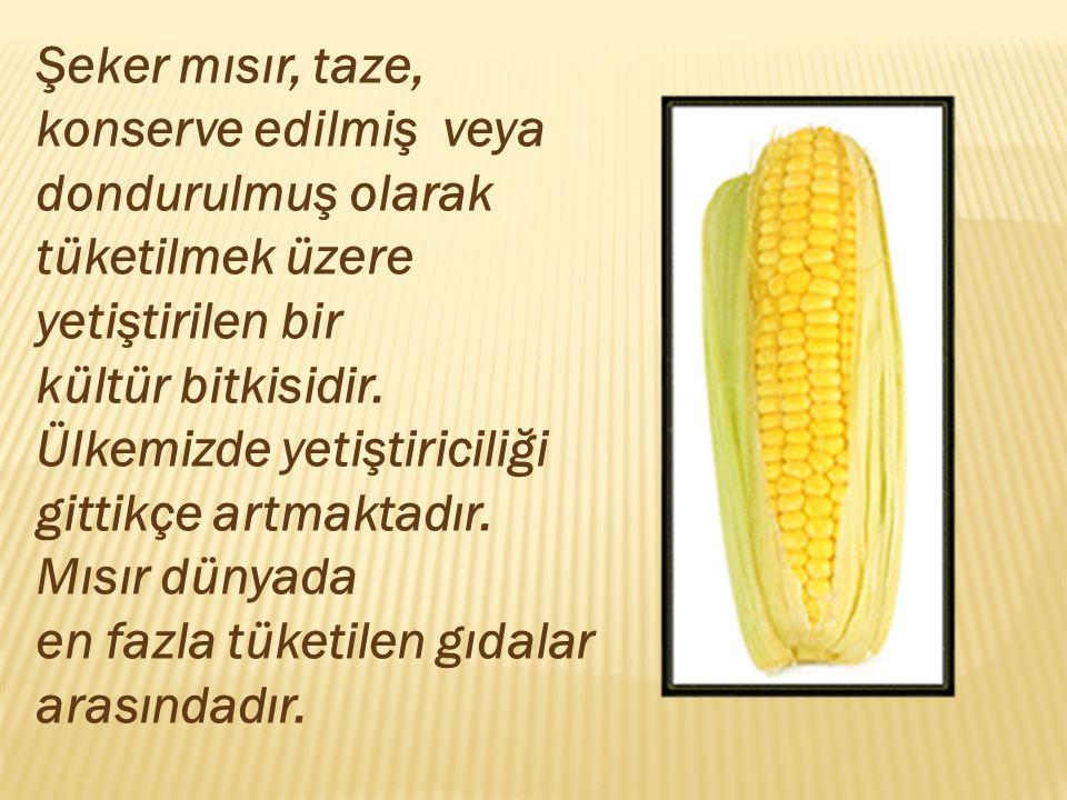 Şeker mısır, taze, konserve edilmiş veya dondurulmuş olarak tüketilmek üzere yetiştirilen bir