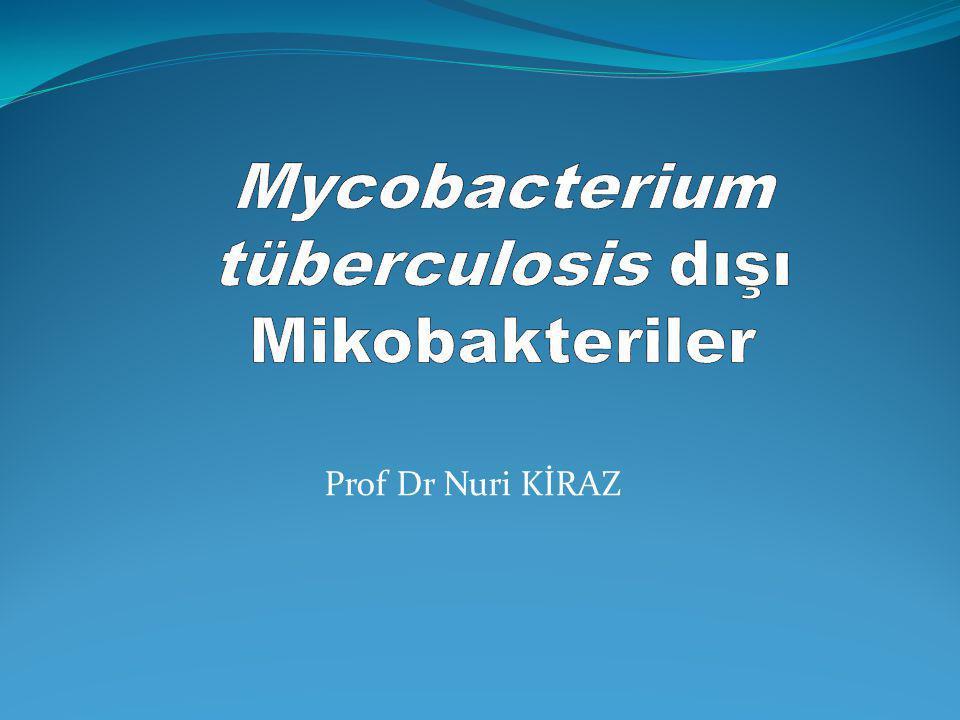 Mycobacterium tüberculosis dışı Mikobakteriler