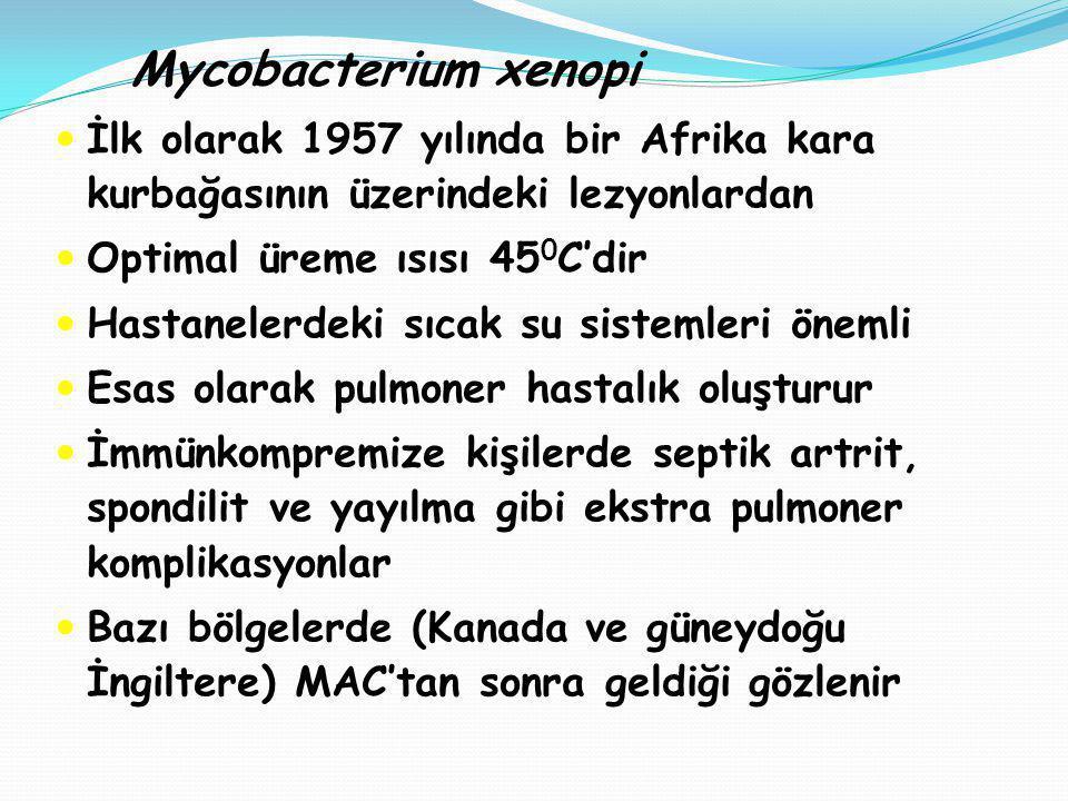 Mycobacterium xenopi İlk olarak 1957 yılında bir Afrika kara kurbağasının üzerindeki lezyonlardan. Optimal üreme ısısı 450C'dir.