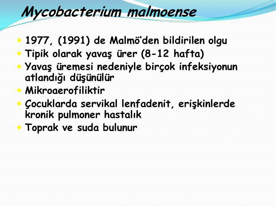 Mycobacterium malmoense