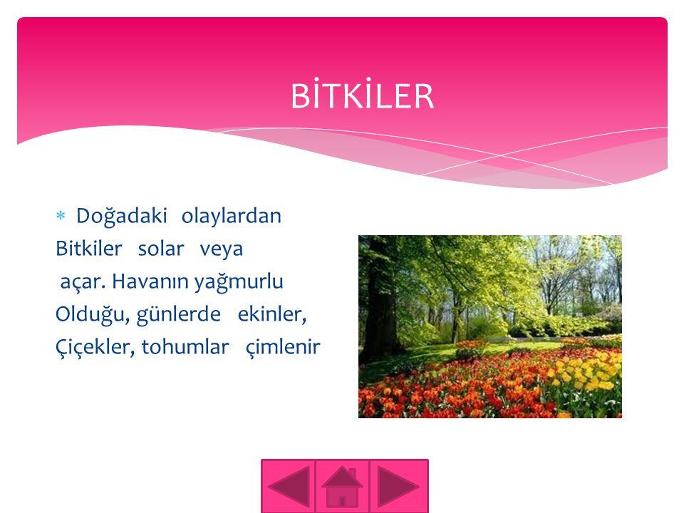 BİTKİLER Doğadaki olaylardan Bitkiler solar veya