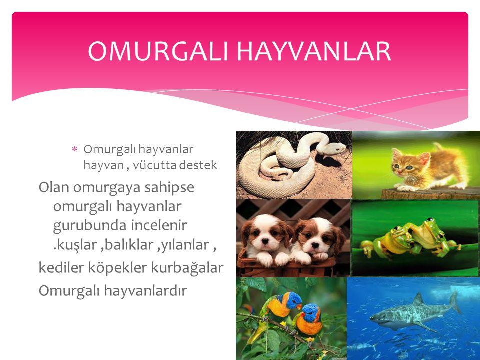 OMURGALI HAYVANLAR Omurgalı hayvanlar hayvan , vücutta destek.
