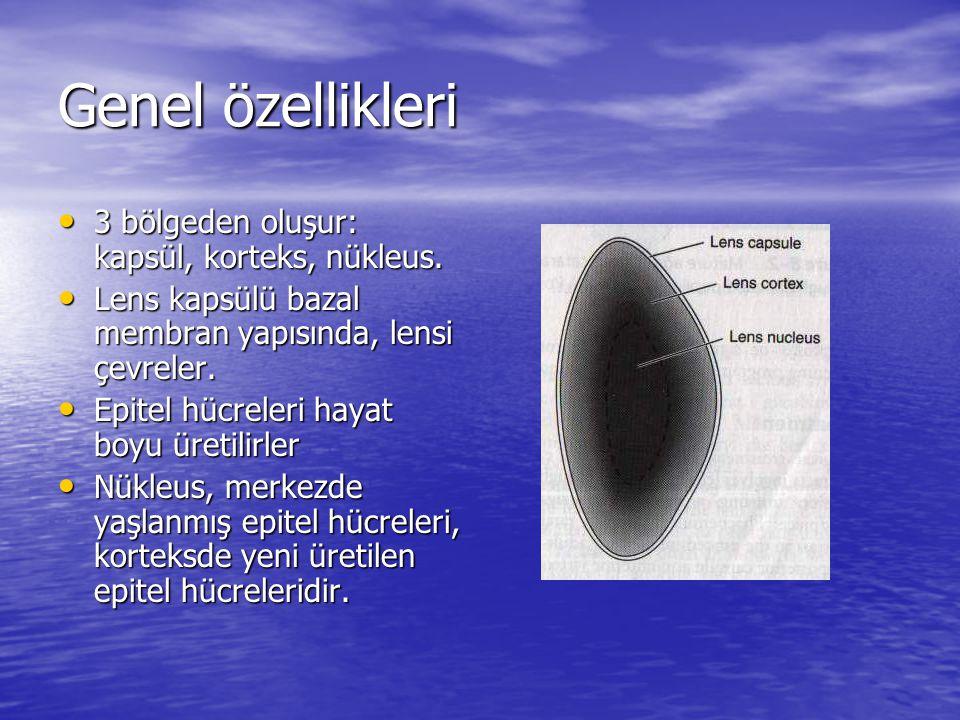 Genel özellikleri 3 bölgeden oluşur: kapsül, korteks, nükleus.