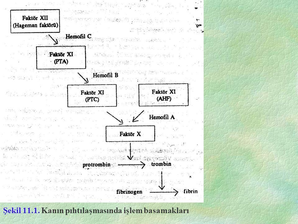 Şekil 11.1. Kanın pıhtılaşmasında işlem basamakları