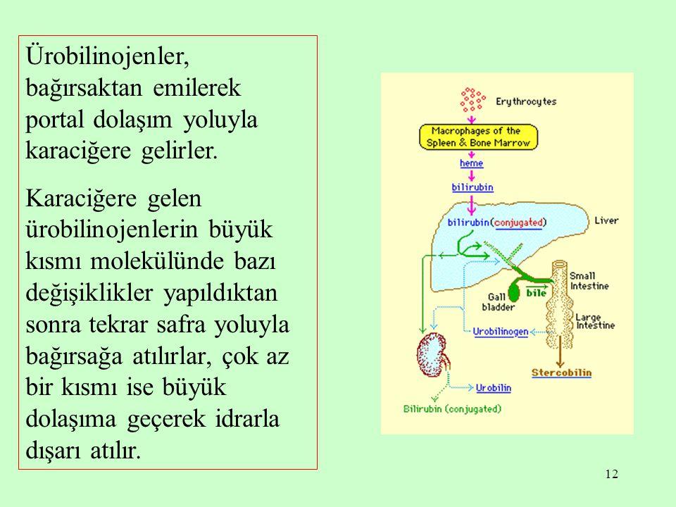 Ürobilinojenler, bağırsaktan emilerek portal dolaşım yoluyla karaciğere gelirler.