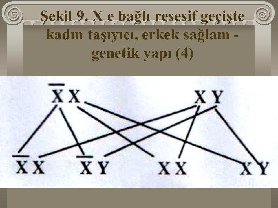 Şekil 9. X e bağlı resesif geçişte kadın taşıyıcı, erkek sağlam - genetik yapı (4)