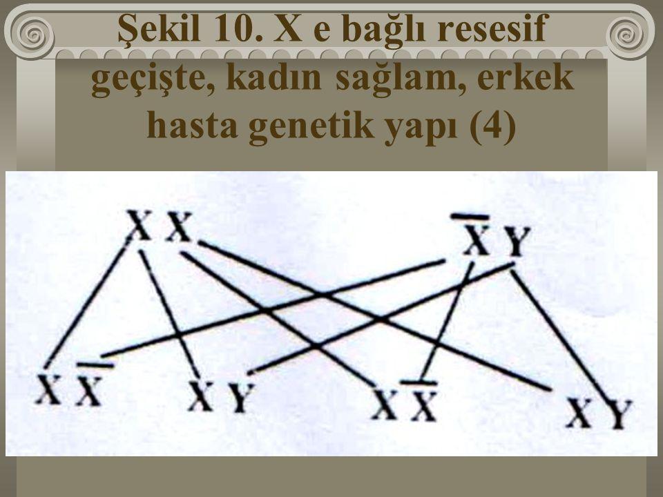 Şekil 10. X e bağlı resesif geçişte, kadın sağlam, erkek hasta genetik yapı (4)