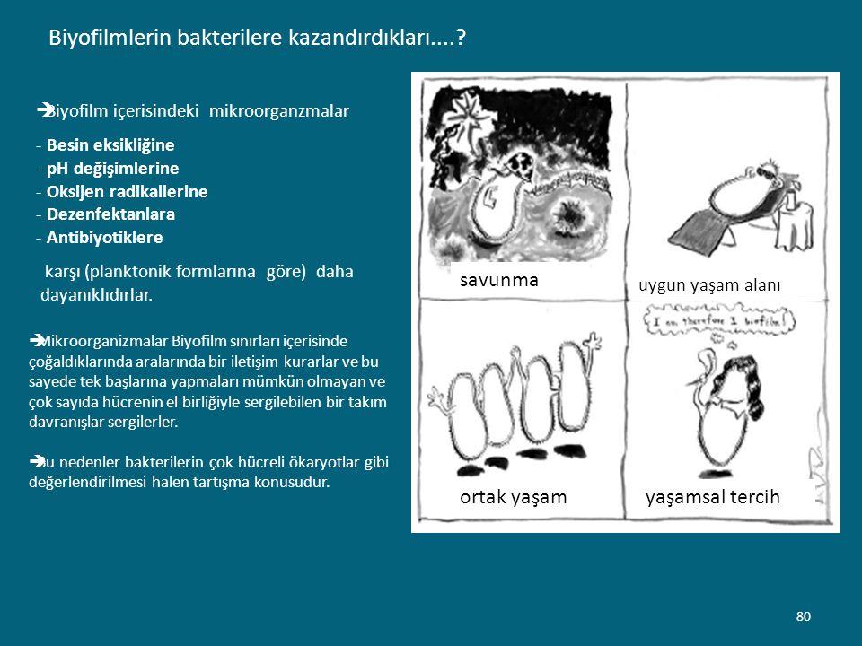 Biyofilmlerin bakterilere kazandırdıkları....