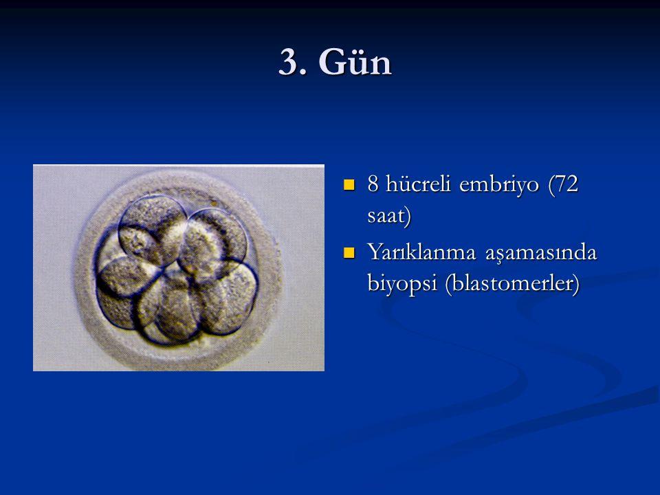 3. Gün 8 hücreli embriyo (72 saat)