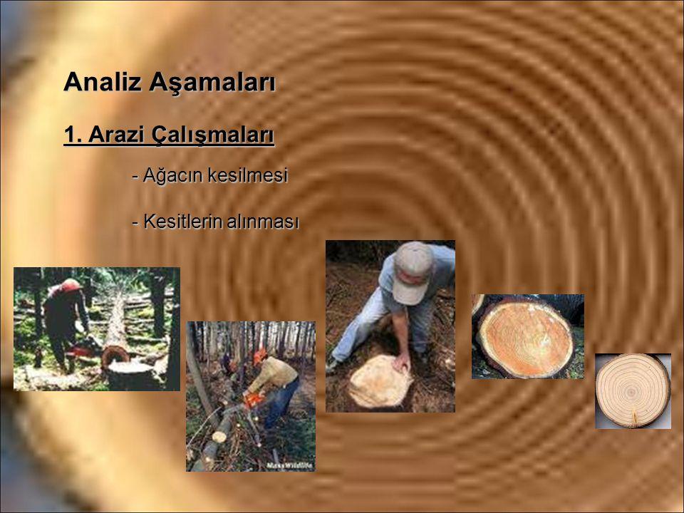 Analiz Aşamaları 1. Arazi Çalışmaları - Ağacın kesilmesi