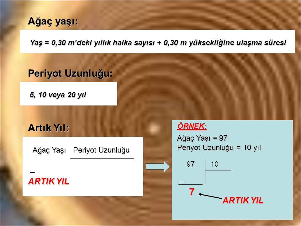 Ağaç yaşı: Periyot Uzunluğu: Artık Yıl: ARTIK YIL ARTIK YIL