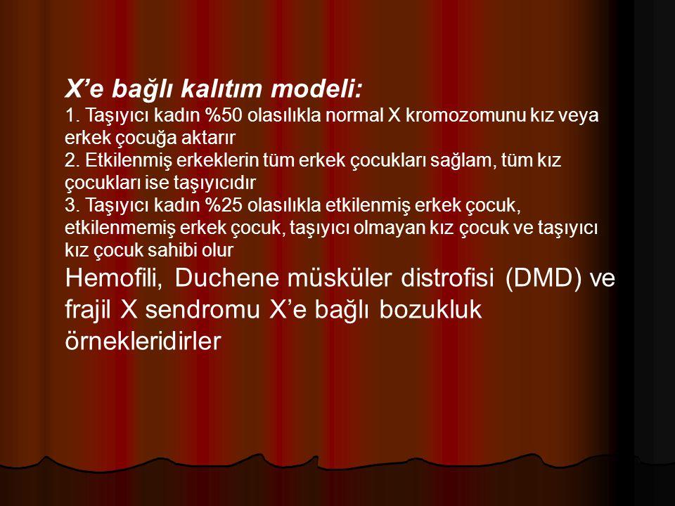 X'e bağlı kalıtım modeli: