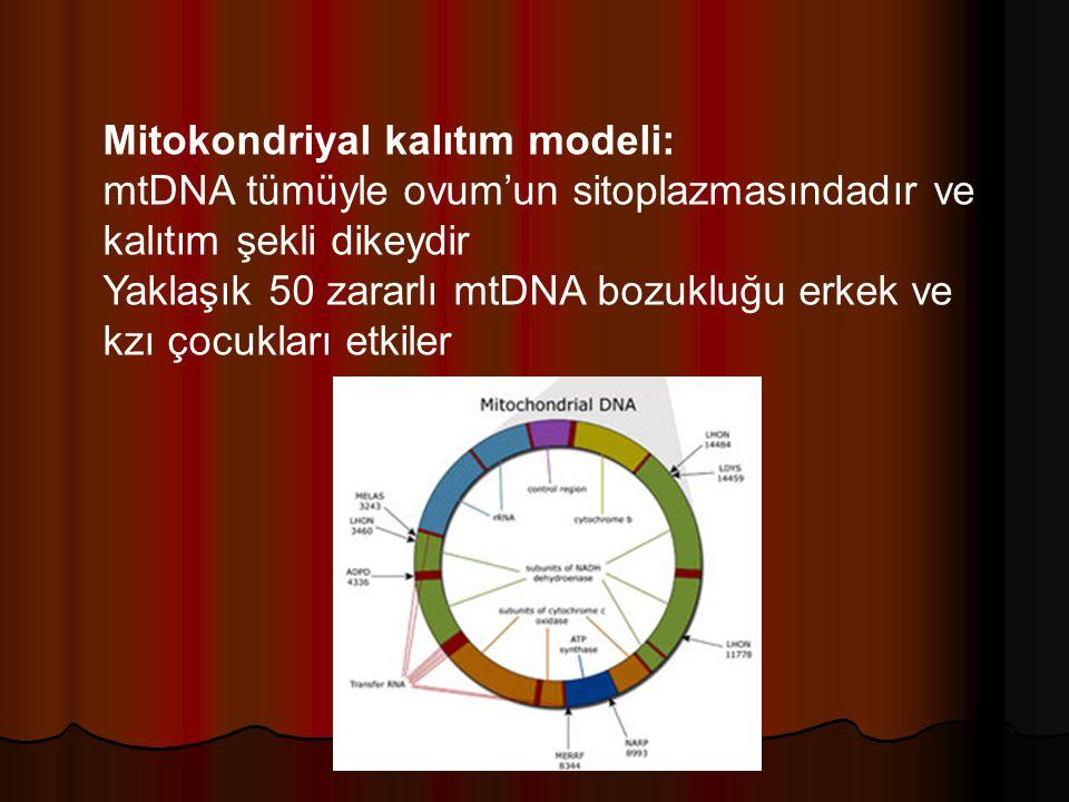 Mitokondriyal kalıtım modeli: