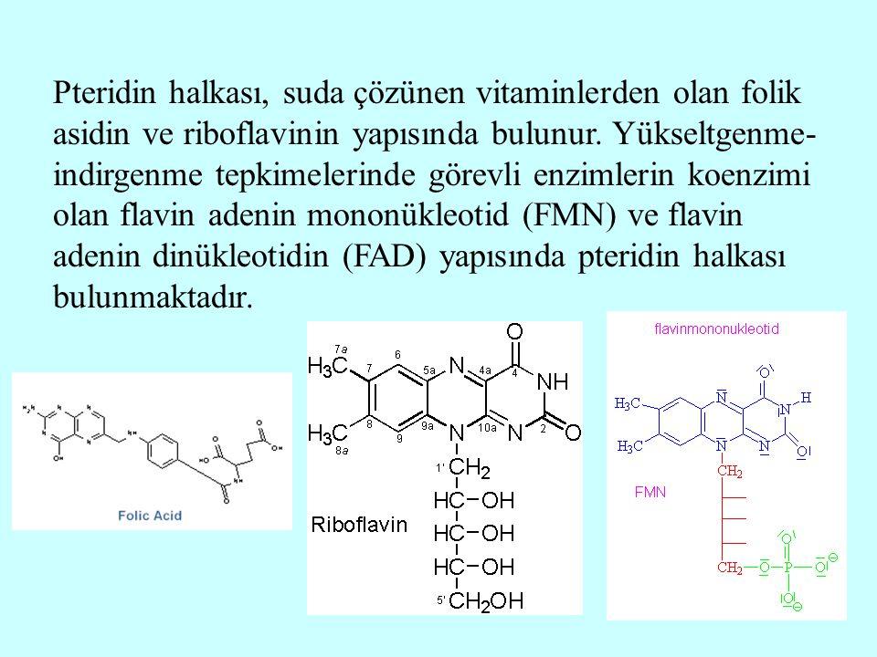 Pteridin halkası, suda çözünen vitaminlerden olan folik asidin ve riboflavinin yapısında bulunur.