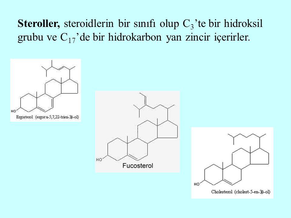 Steroller, steroidlerin bir sınıfı olup C3'te bir hidroksil grubu ve C17'de bir hidrokarbon yan zincir içerirler.