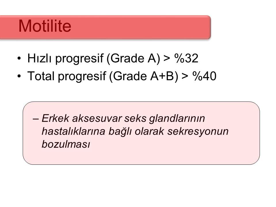 Motilite Hızlı progresif (Grade A) > %32