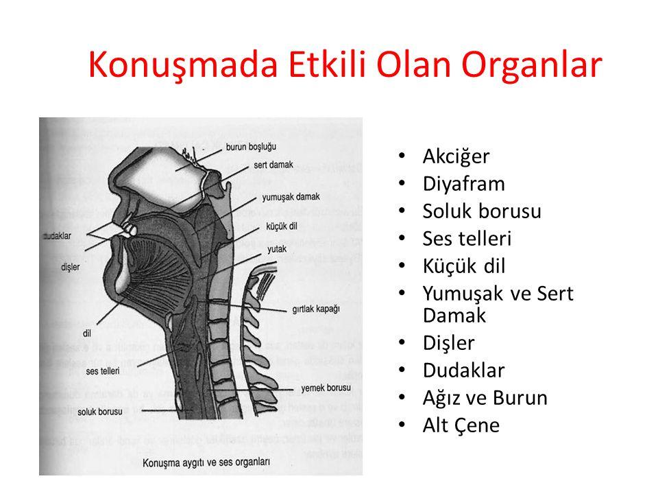 Konuşmada Etkili Olan Organlar
