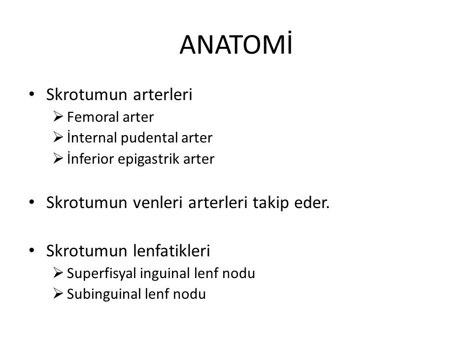 ANATOMİ Skrotumun arterleri Skrotumun venleri arterleri takip eder.