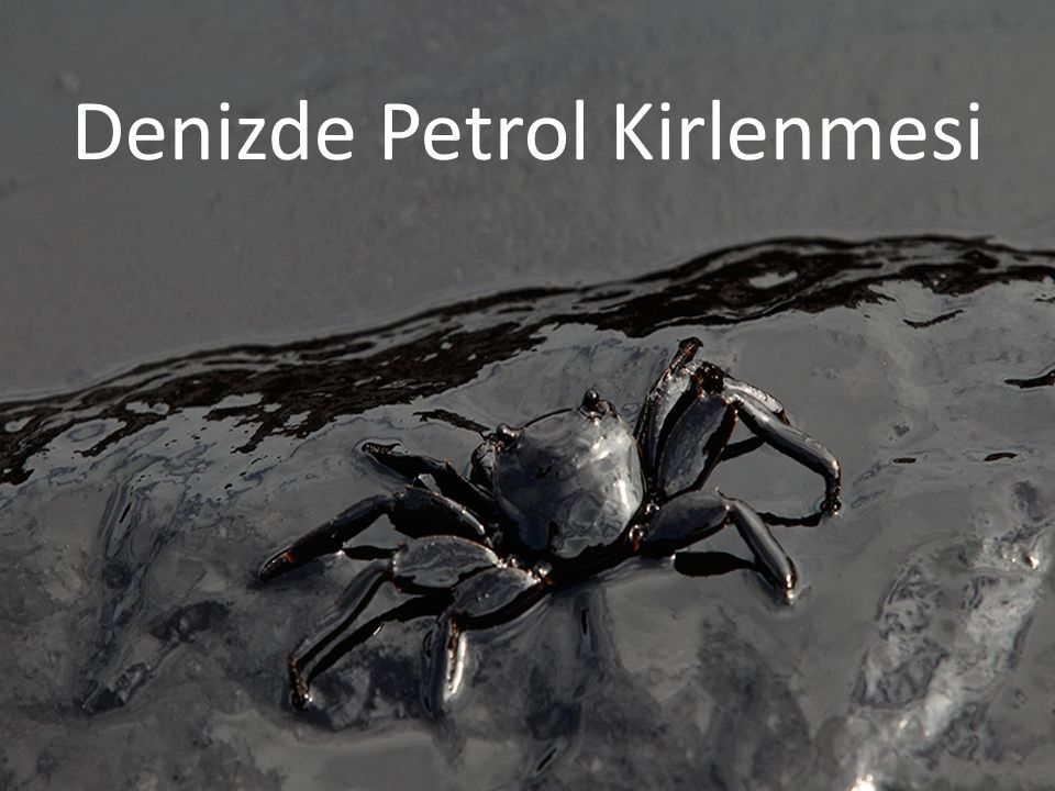 Denizde Petrol Kirlenmesi
