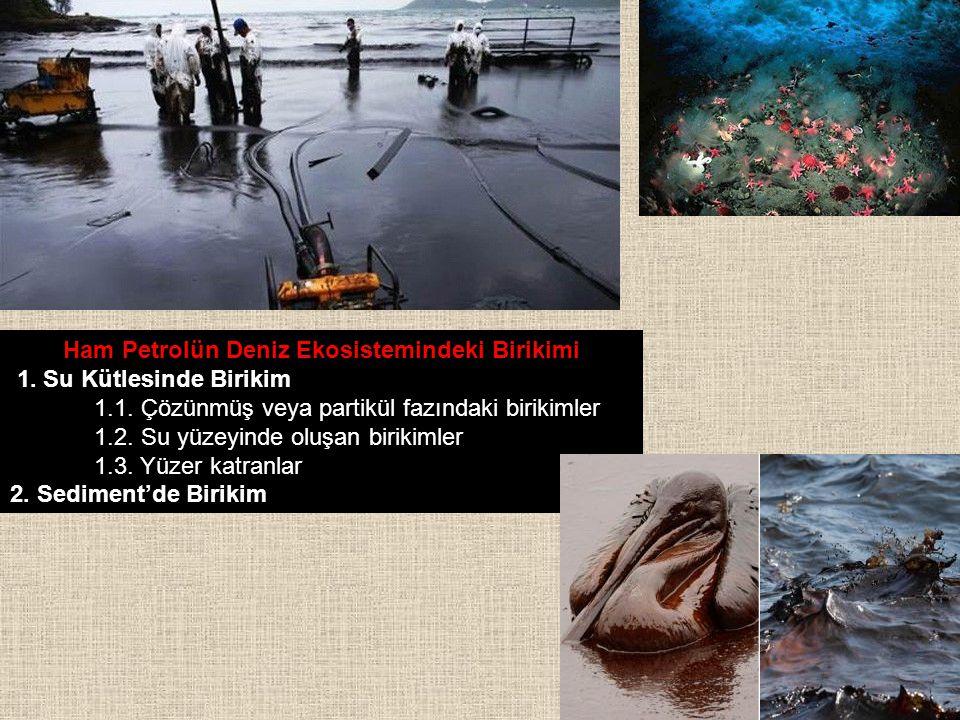 Ham Petrolün Deniz Ekosistemindeki Birikimi